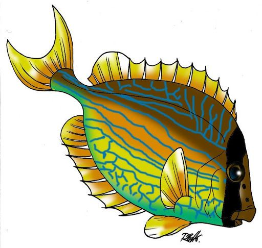 512x486 20 Best Fish Images On Fish, Pisces And Clip Art