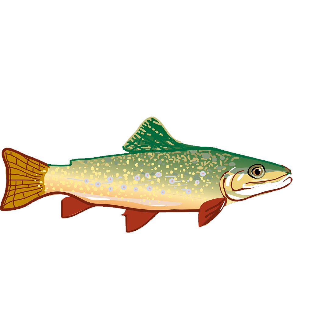 1024x1045 Rainbow Trout Clip Art