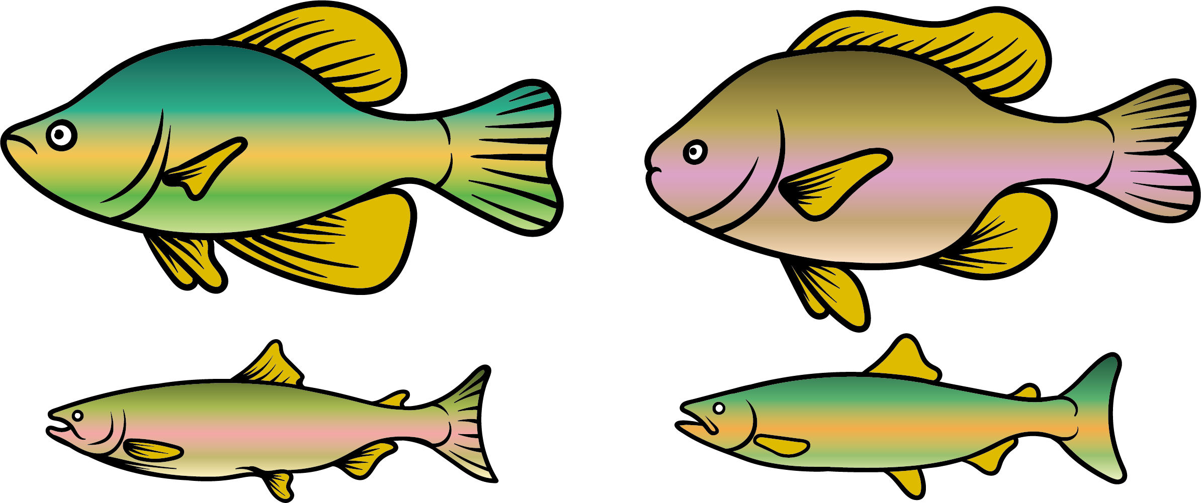 2388x1001 Rainbow Trout Fish Clip Art