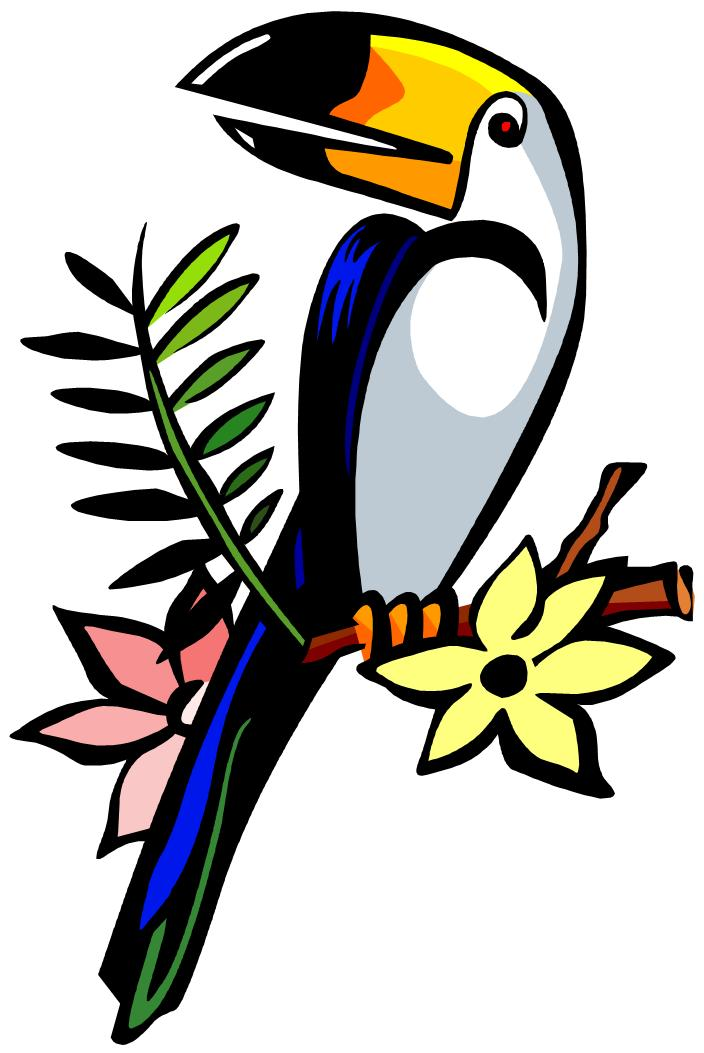 704x1053 Toucan Clipart Head Free Collection Download And Share Toucan