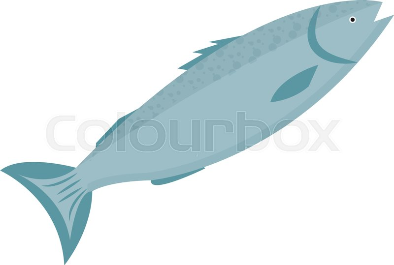 800x539 Trout Icon Flat Style. Forel Fish Isolated On White Background