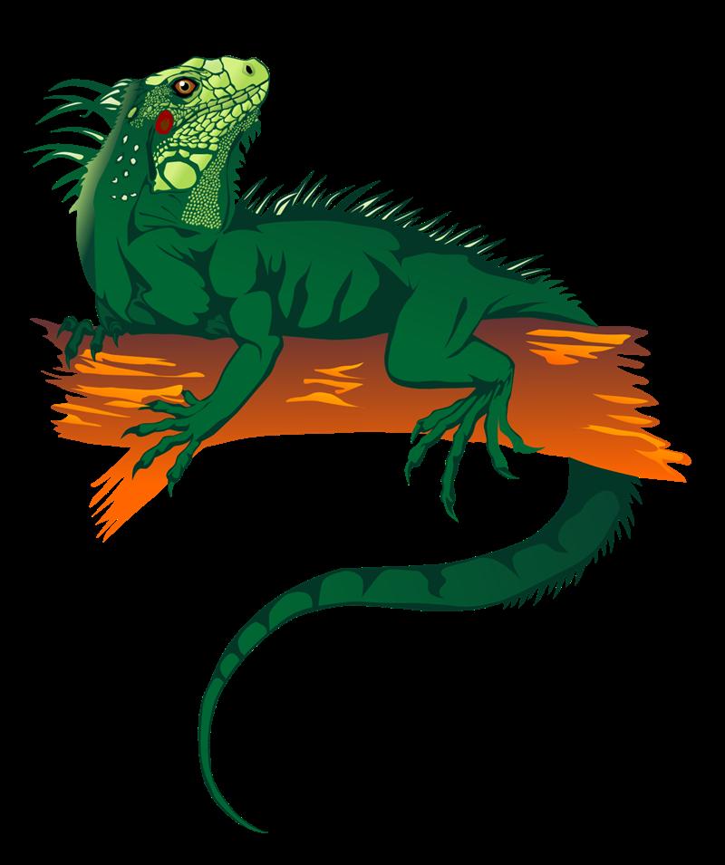 800x955 Lizard Blue Iguana Green Iguana Reptile Clip Art