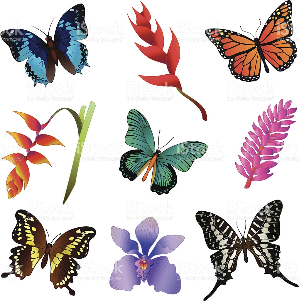 1019x1024 Rainforest Clipart Rainforest Butterfly Free Collection Download