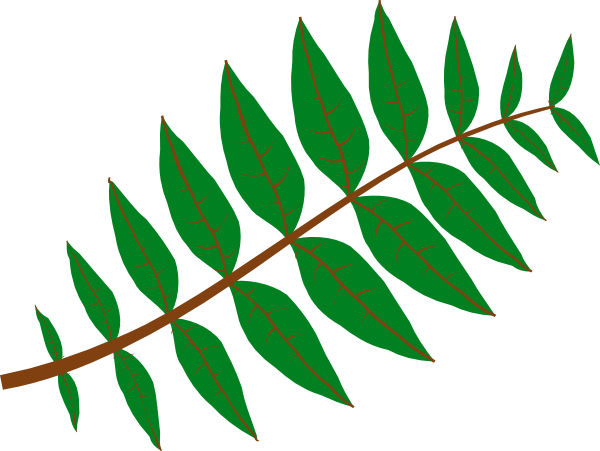 600x451 Rainforest Vines Clipart