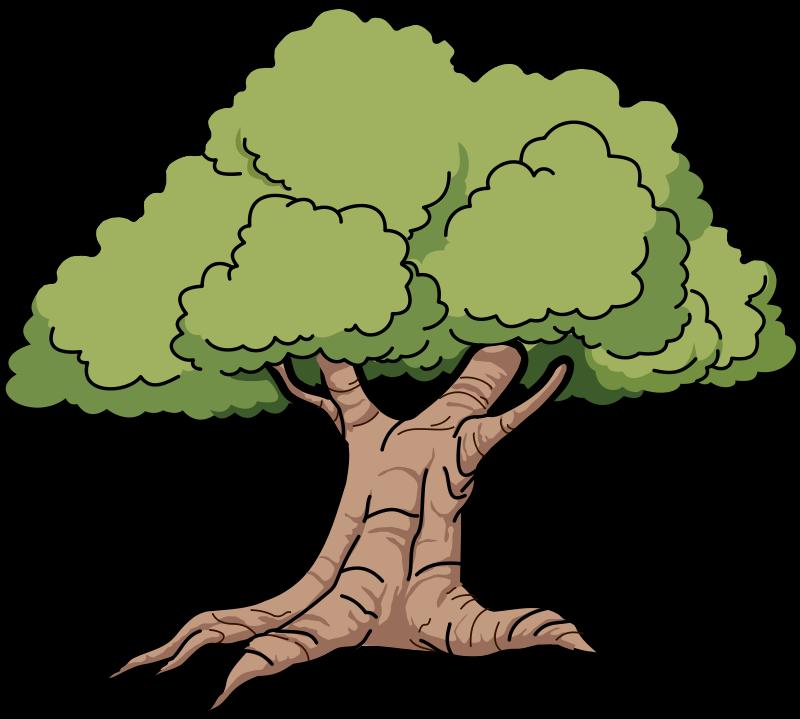 800x719 Rainforest Clipart Narra Tree