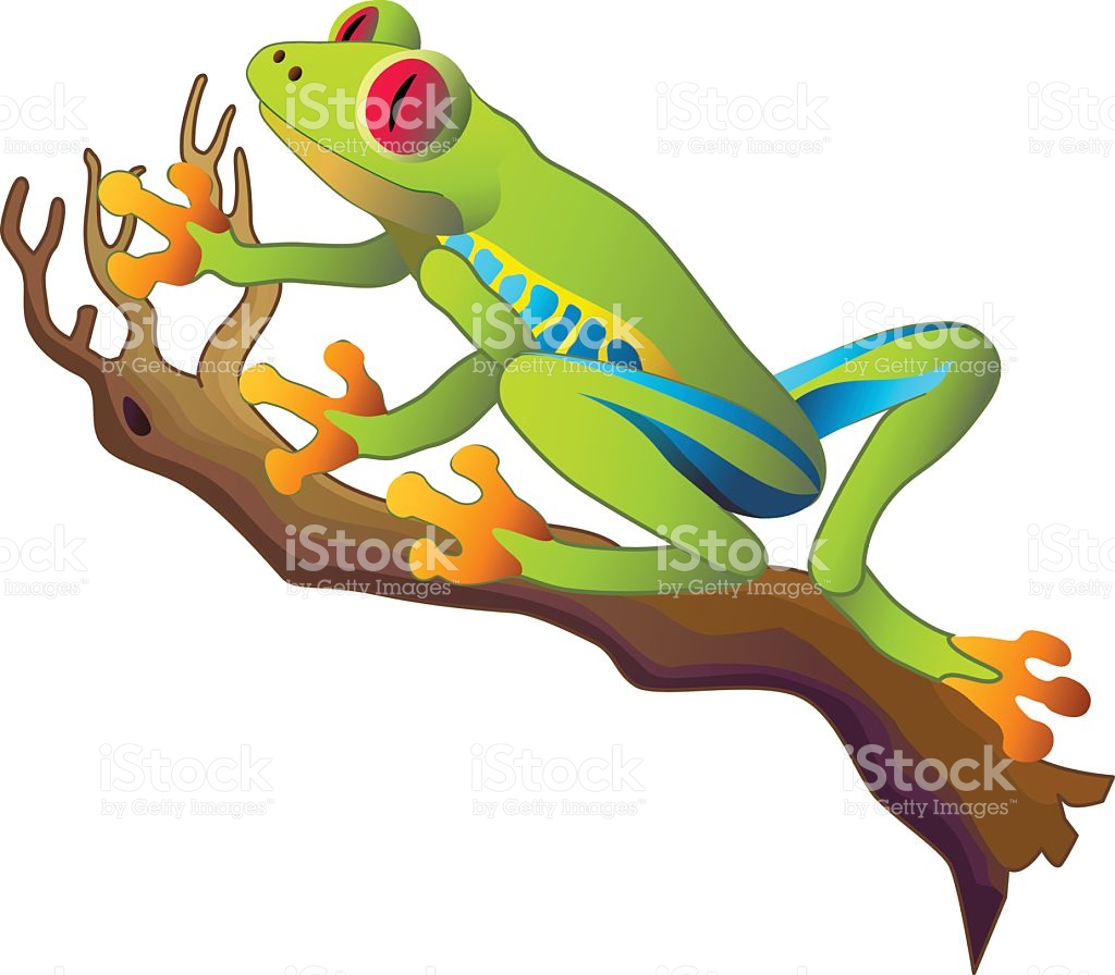 1024x896 Tree Frog Clipart Tropical Rainforest