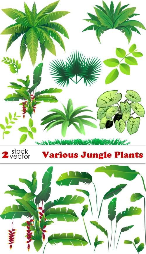Rainforest Flowers Clipart