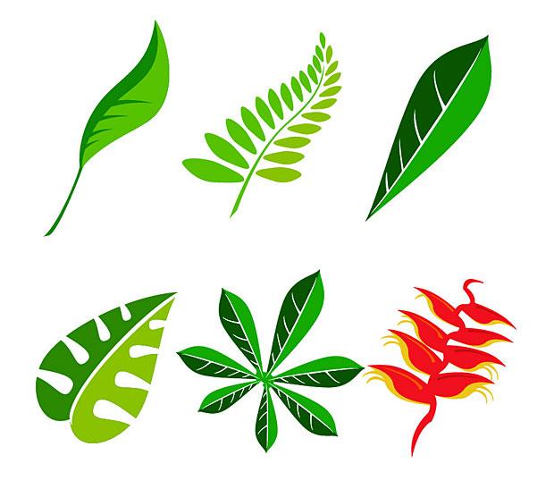 620x547 Leaves Jungle Clipart, Explore Pictures