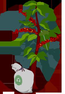 227x328 Rainforest Alliance Track It Back Coffee