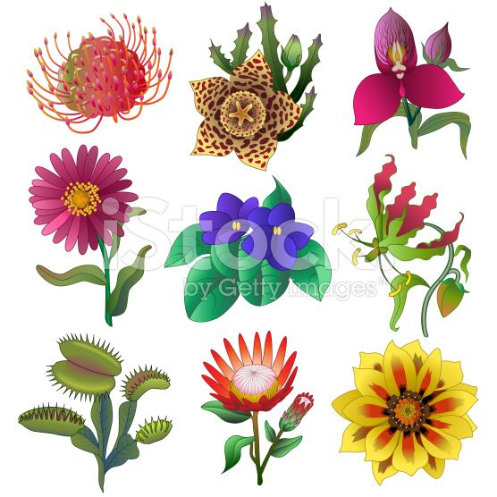 556x556 Royalty Free Jungle Flower Free Download Clip Art