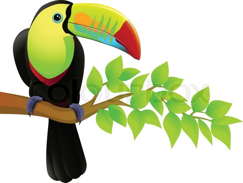 800x603 Toucan Clipart Flying