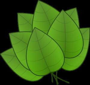 300x283 3.2. Rainforest Layers