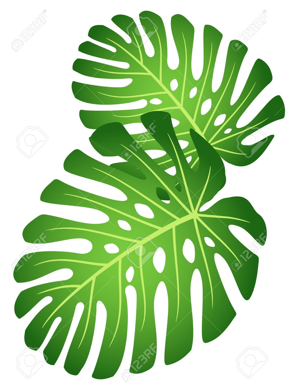 992x1300 Clipart Jungle Leaves Amp Clip Art Jungle Leaves Images