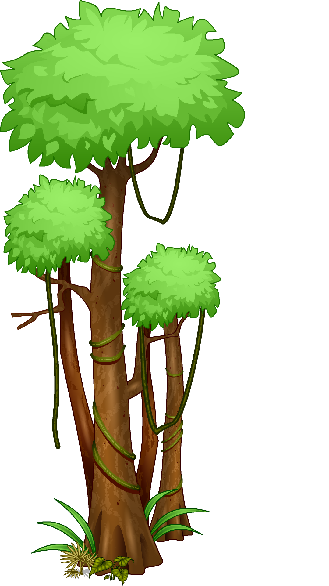 Rainforest Trees Clipart