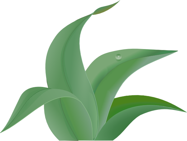 600x454 Jungle Leaf Clipart, Explore Pictures