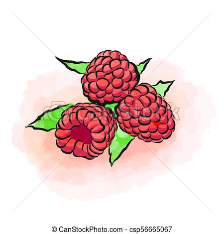 450x470 Colored Drawing Of Raspberries. Fresh Design Of Colorful Fruits