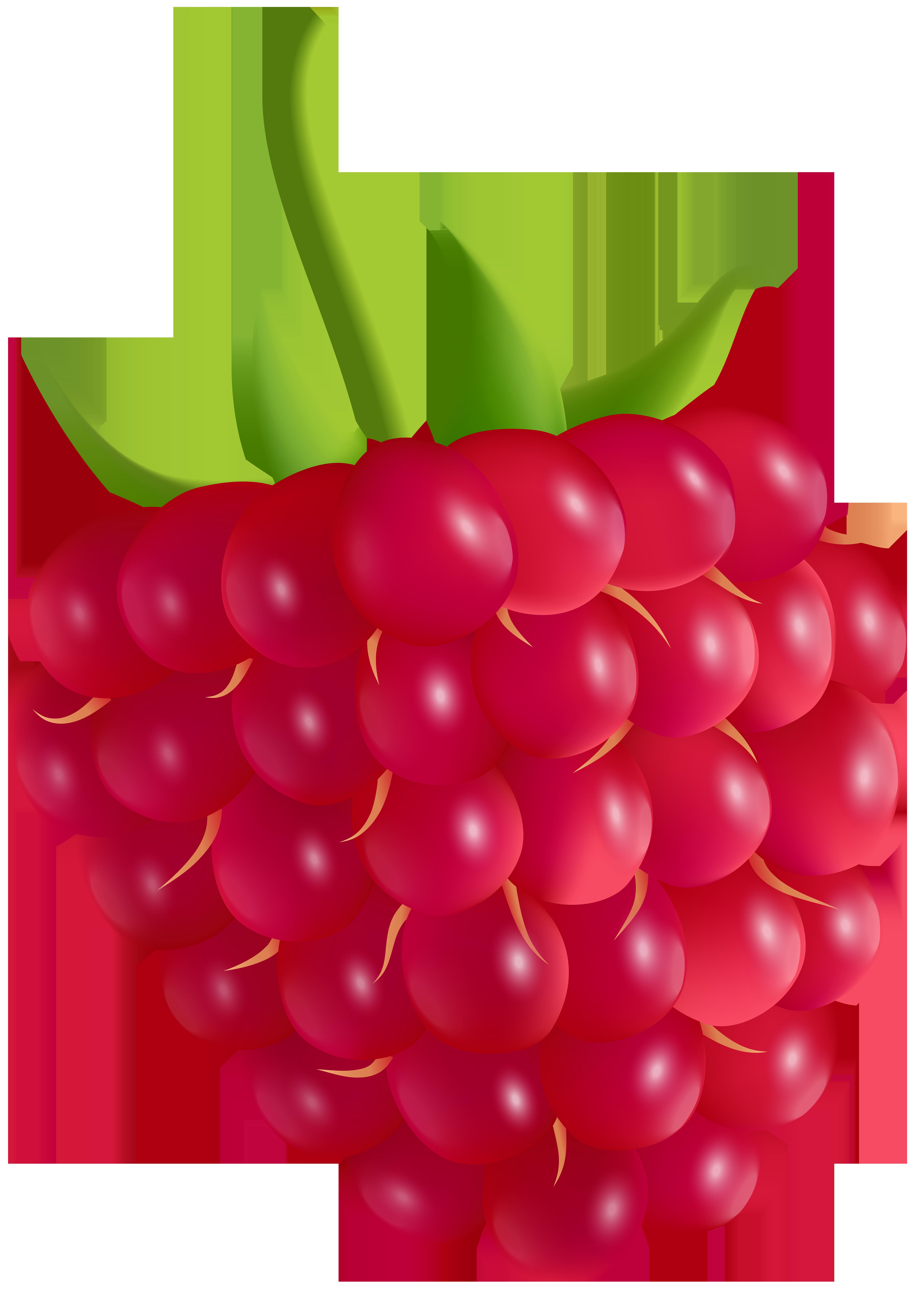 5726x8000 Raspberry Transparent Png Clip Art Imageu200b Gallery Yopriceville