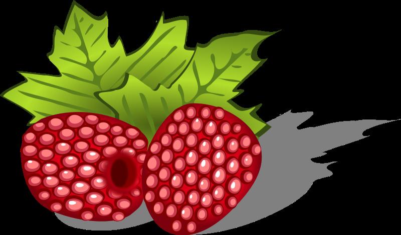 800x470 Raspberry Clip Art