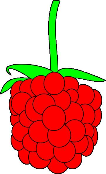 360x590 Simple Raspberry Clip Art