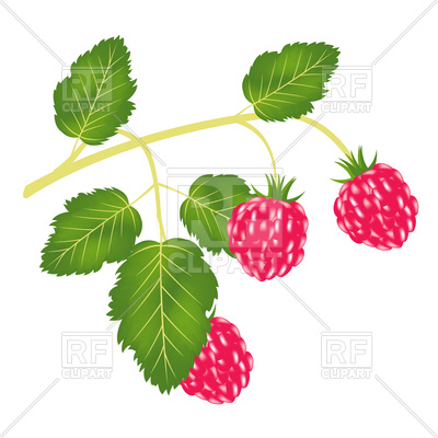 400x400 Branch Of Ripe Raspberry Royalty Free Vector Clip Art Image
