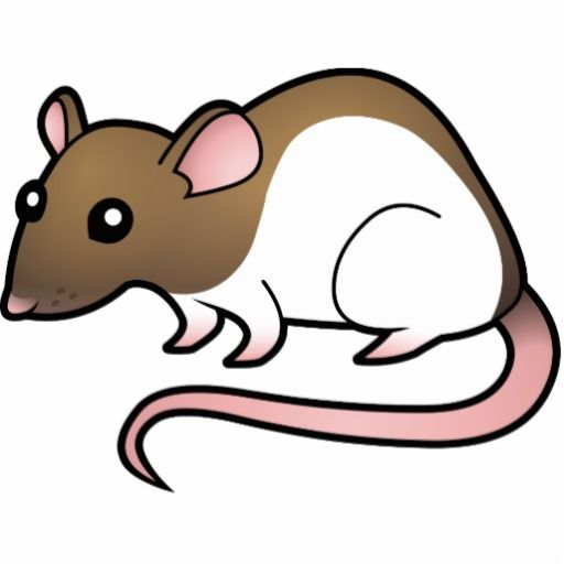 rat clipart at getdrawings com free for personal use rat clipart rh getdrawings com rat clipart image rat clipart free