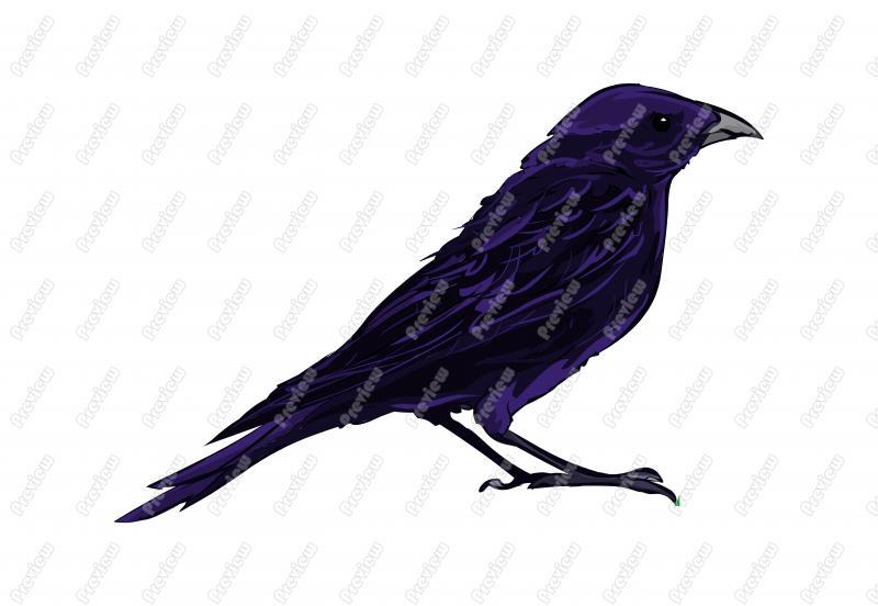 800x552 Realistic Shiny Cowbird Character Clip Art