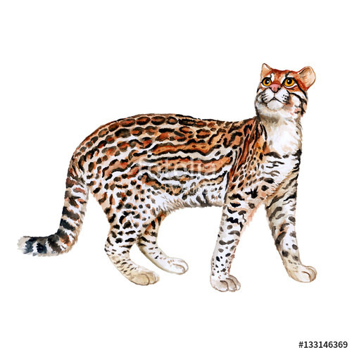 500x500 Watercolor Portrait Of Ocelot Cat With Dots, Stripes Isolated