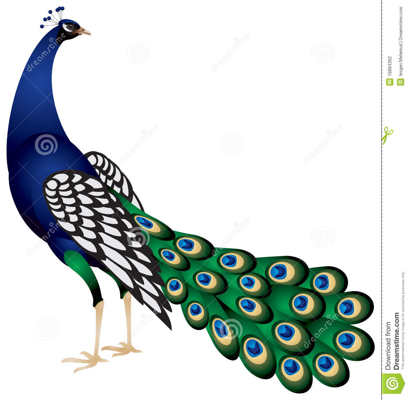 1327x1300 Peacock Clip Art Amp Peacock Clipart Images