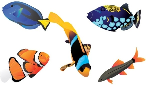 586x343 Fish Free Vector Download (1,027 Free Vector) For Commercial Use