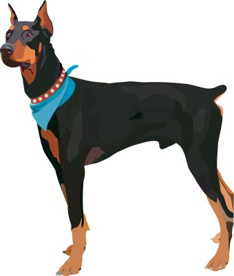 340x401 Real Puppy Clipart