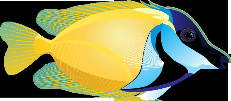 746x328 Realistic Fish Clipart