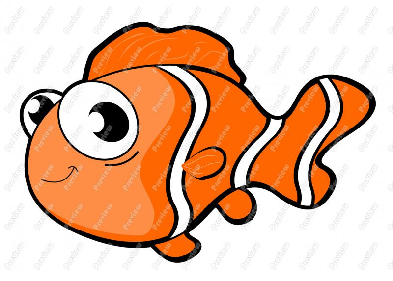 800x573 Clownfish Clipart Fish Body
