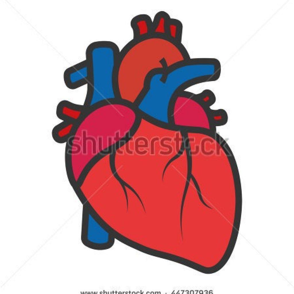 real heart clipart best clipart for pro user u2022 rh bestclipart pro Real Heart Artwork Cartoon Real Heart