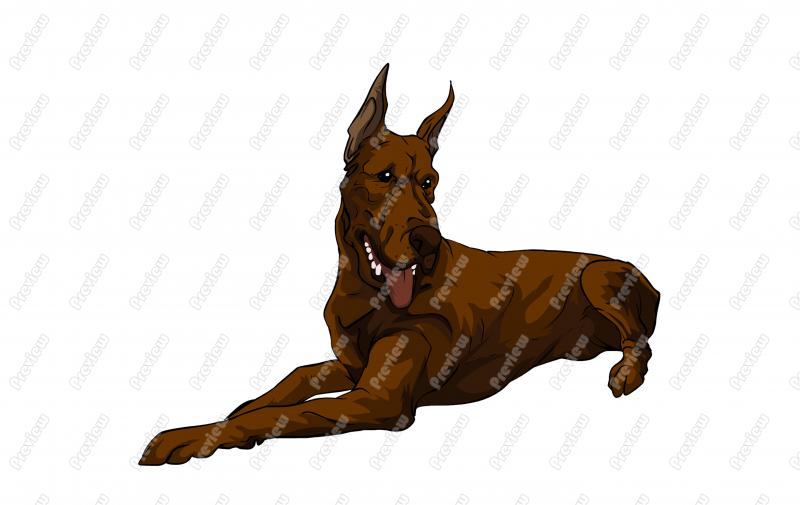 800x505 Realistic Great Dane Dog Character Clip Art