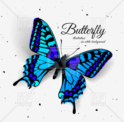 400x396 Realistic Butterfly Illustration Of A Top View Royalty Free Vector