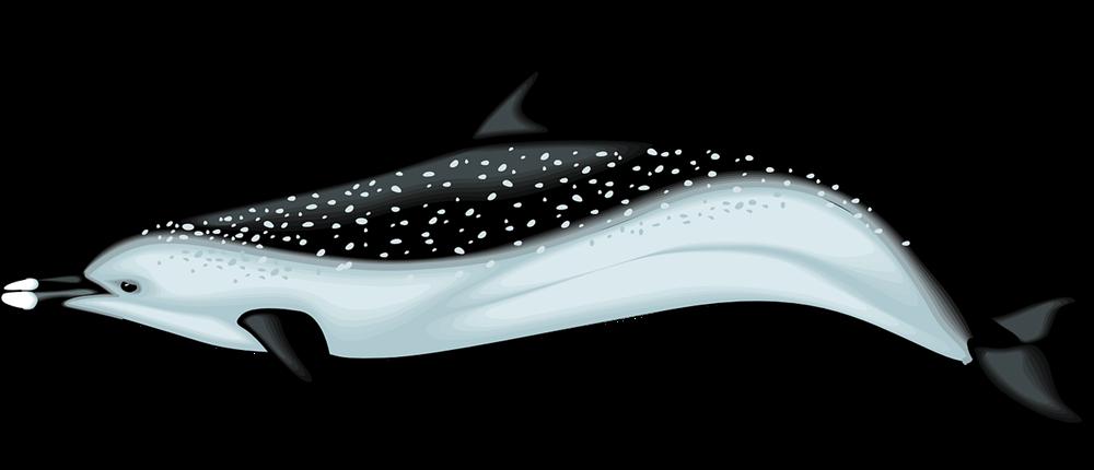 1000x430 Top 77 Dolphin Clip Art