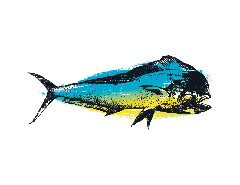 793x612 Looking For Great Realistic Mahi Mahi Fish Clip Art For Your Art