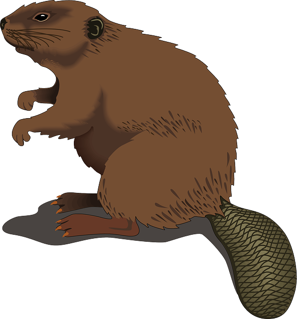 595x640 Realistic Animal Clipart