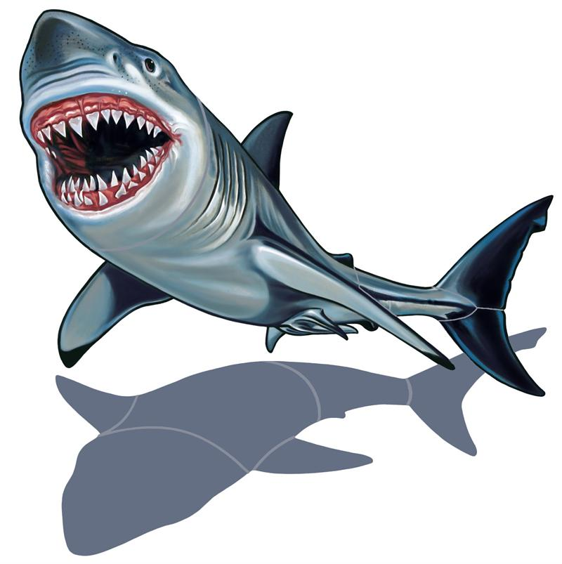 800x803 Great White Shark Clipart White Background Free Collection