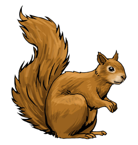 455x477 Top 80 Squirrel Clip Art