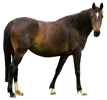 413x384 Collection Of Real Horse Clipart High Quality, Free Cliparts