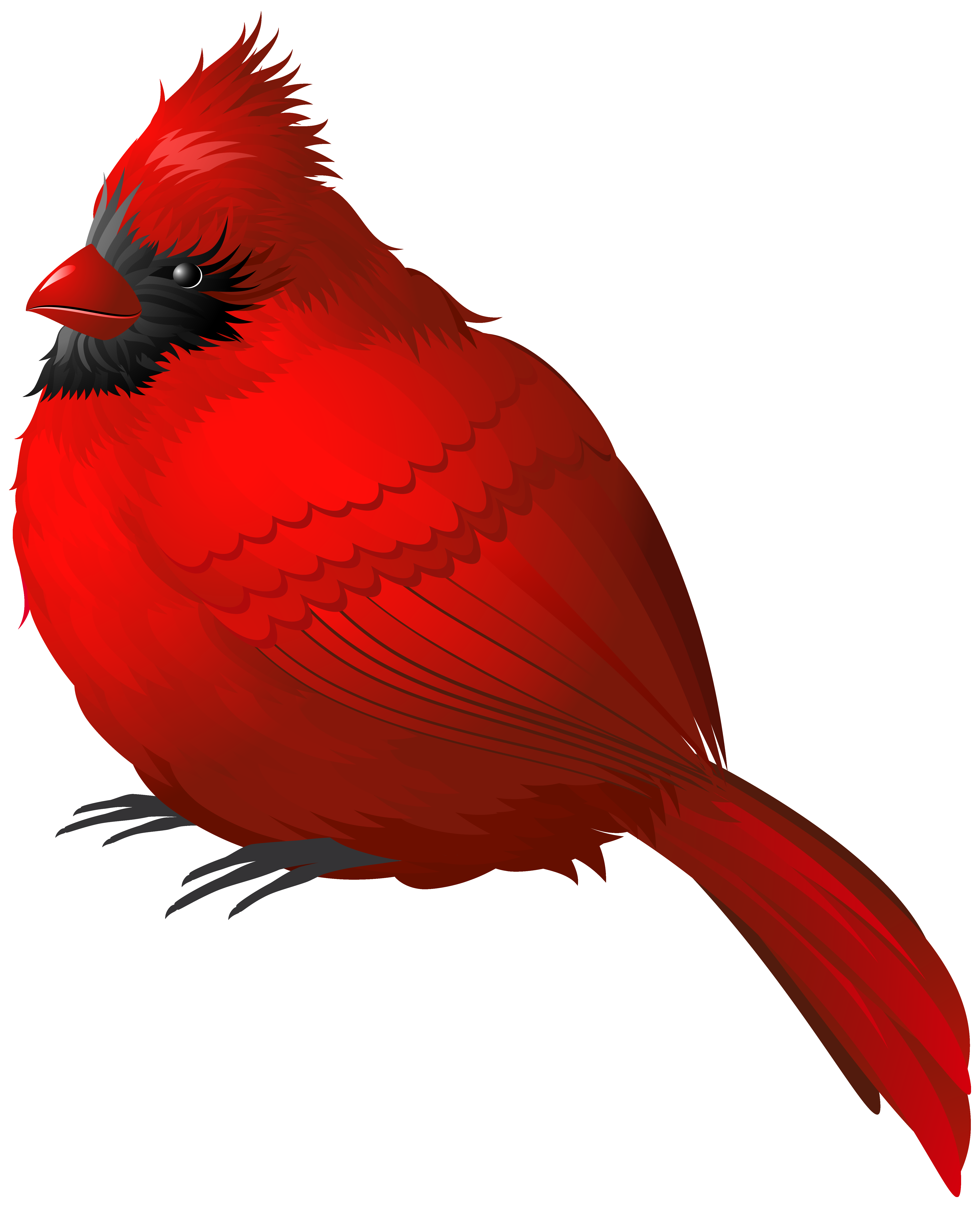 4925x6068 Red Winter Bird Png Clipart Imageu200b Gallery Yopriceville