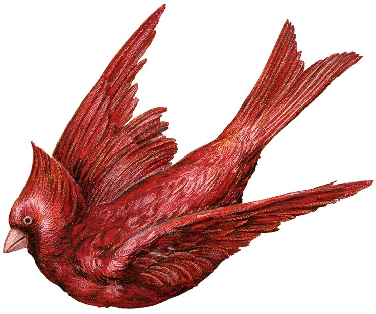 736x616 286 Best Ephemera Birds Amp Nests Images On Vintage