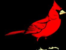 220x165 Cardinal Clipart Free Animal Clipart Bird Clipart Northern