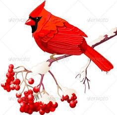 236x232 Clip Art Illustration Of A Red Cardinal Bird Sitting On A Branch