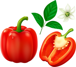 300x264 Red Bell Pepper (Bulgarian Pepper) Isolated On White Background