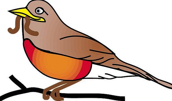 596x349 Red Robin, Fowl, Animal, Physical, Bird, Robin, Worm, Larva Pixcove