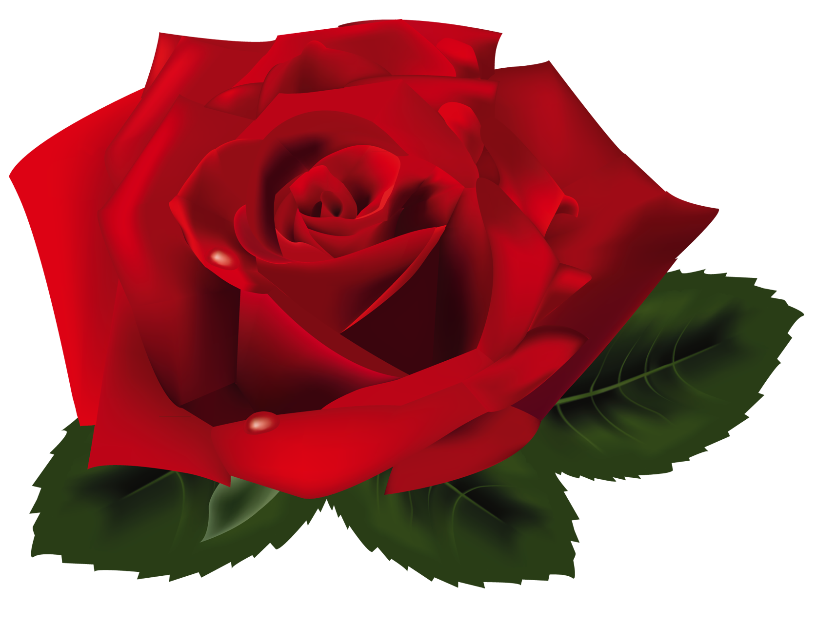 1673x1282 Red Rose Png Clipartu200b Gallery Yopriceville