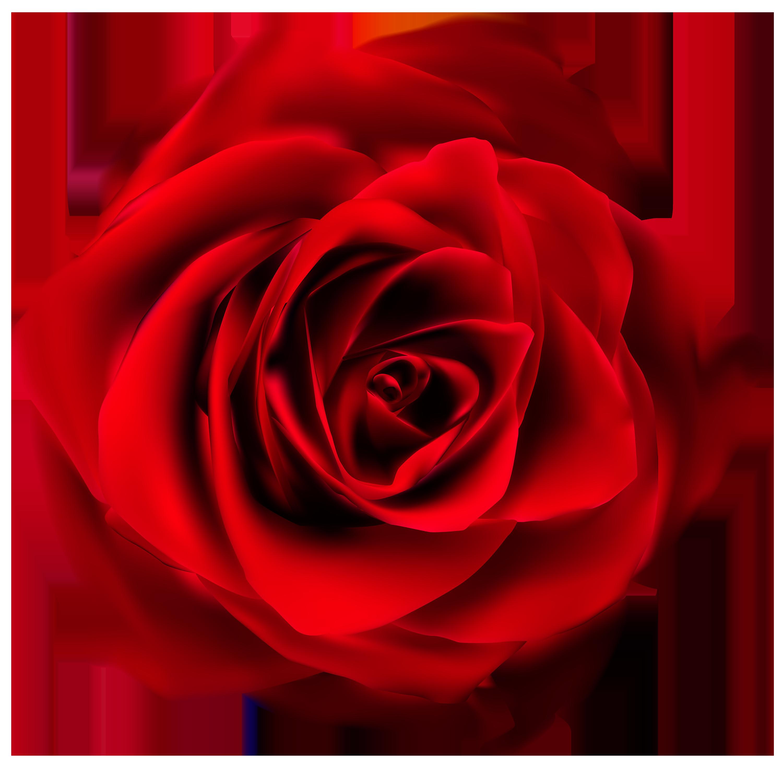 3000x2943 Red Rose Transparent Png Clip Art Imageu200b Gallery Yopriceville