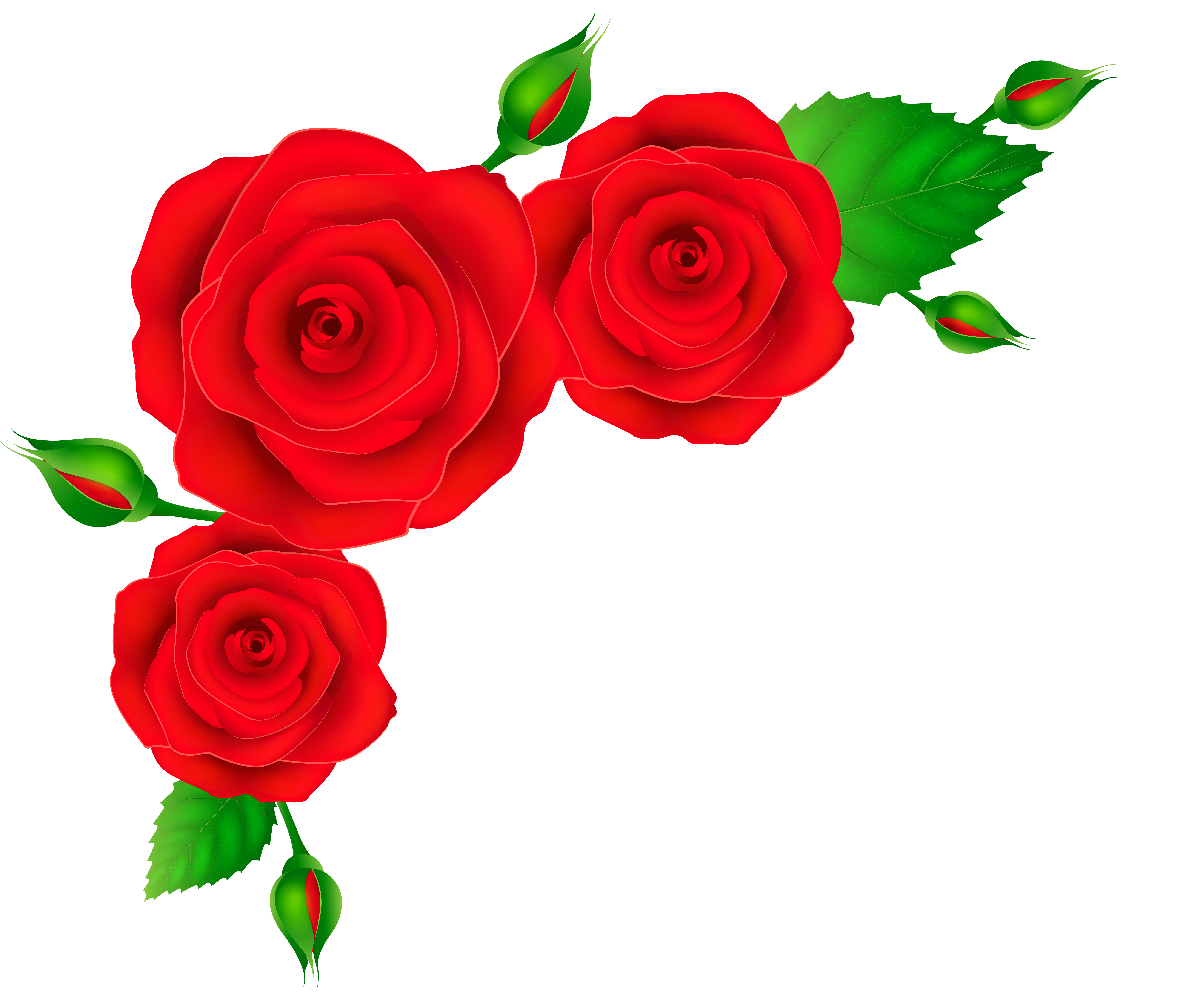 Red Rose Clipart At Getdrawings Com Free For Personal Use Red Rose